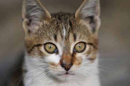 pete: Portrait of green-eyed cat.