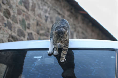 Cat descending through the car.