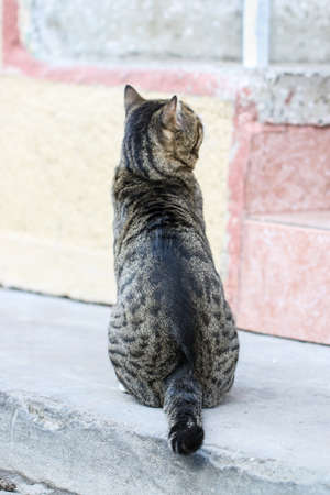 pete: Back view of gray cat sitting on the street.