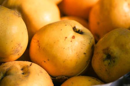 membrillo: Quince. Ripe yellow autumn fruits