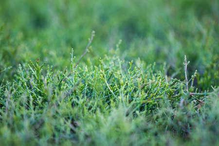 Green grass blur closeup view for background texture.