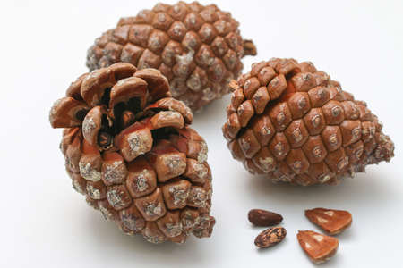 Stone pine cone with seeds and shelled nuts over white background. Geometric pine cone, seeds and shelled nuts.
