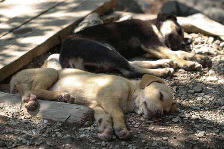 Young dogs are sleeping in the nature. Stock Photo