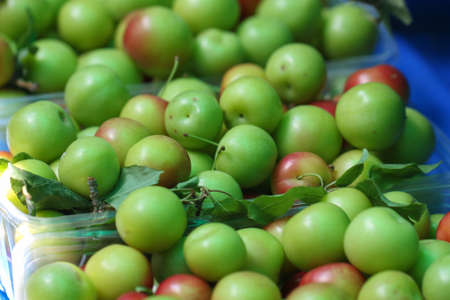 Green and red plums. Fresh and healty fruits. Stock Photo