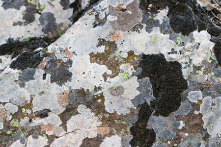 Old stone covered with lichen and moss. Rock stone texture background. Stock Photo