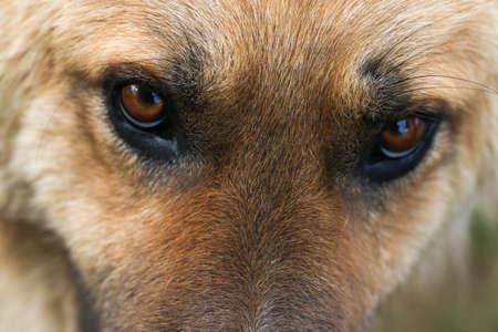 Faceshot of worried and sad dog. Portrait. Stock Photo