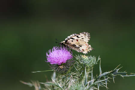 Butterfly sitting on a flower on blurred grass background. Stock Photo