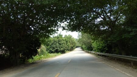 Street road with   trees aside