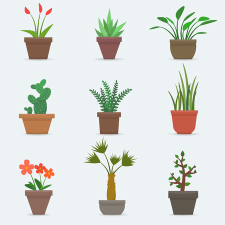 garden flower: House plants and flowers in pots. Flat style vector illustration. Illustration