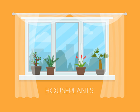 window curtain: House plants and flowers in pots in window with a curtain. Flat style vector illustration.