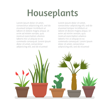 pot leaf: House plants and flowers in pots with text. Flat style vector illustration.