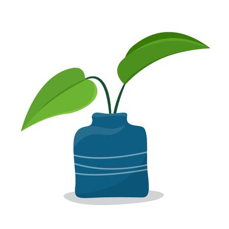Plants in vase. Stock Photo