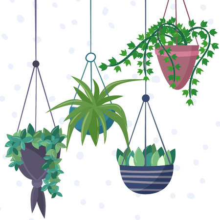 Hanging house plants and flowers in pots. Illustration