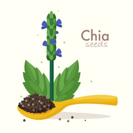 Chia seeds with plant. Flat style vector illustration