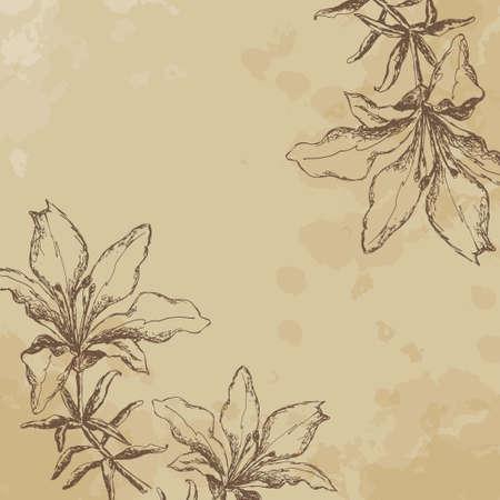 Tiger Lily. sketch. vintage. frame Vector