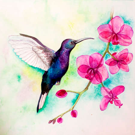 watercolor illustration kallibri and orchid. Watercolor background. Can be used as a logo.