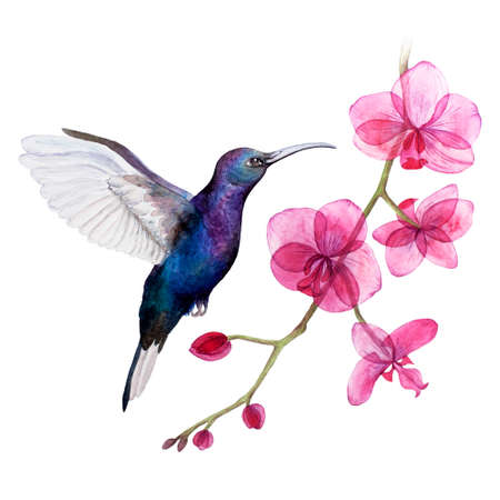 watercolor illustration kallibri and orchid. Isolated. Can be used as a logo.