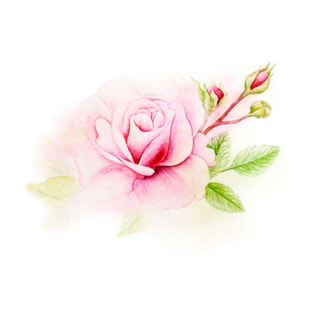 trabajo manual: Background texture of watercolor. Postcard pink rose. Picture used as a template. The picture can be used in your wedding business.