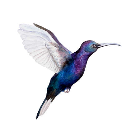 watercolor illustration kallibri. Isolated. Can be used as a logo. Stock Photo