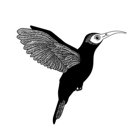Black and white hummingbird. Isolated. Can be used as a logo.