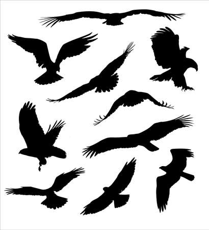 nobleman: uccello rapace Vettoriali