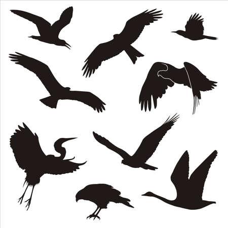 kuşların siluetleri