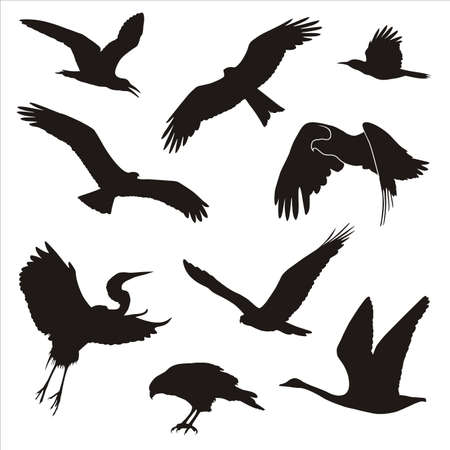 silhouettes of birds Vector