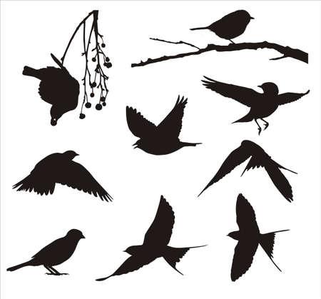 Şarkı kuşlar