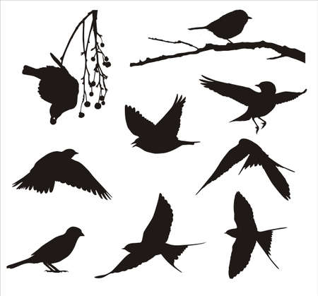 Song birds Vector