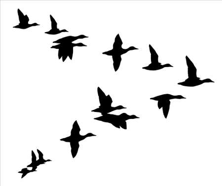 bird icon: flock of ducks Illustration