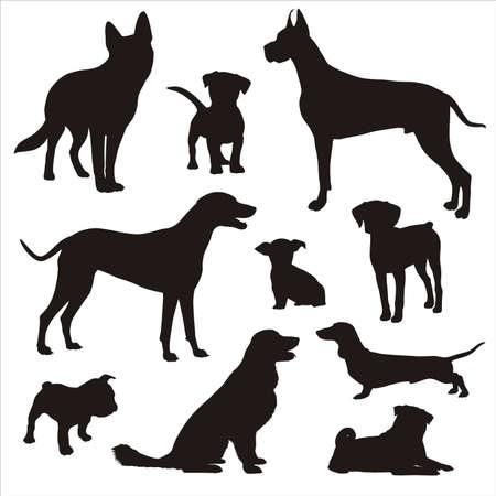 dogd siluetleri