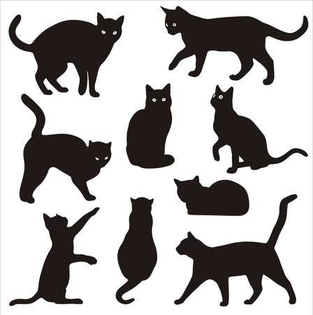 kedilerin siluetleri