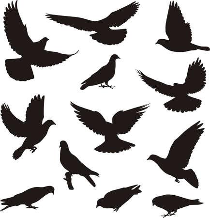 Güvercin siluetleri