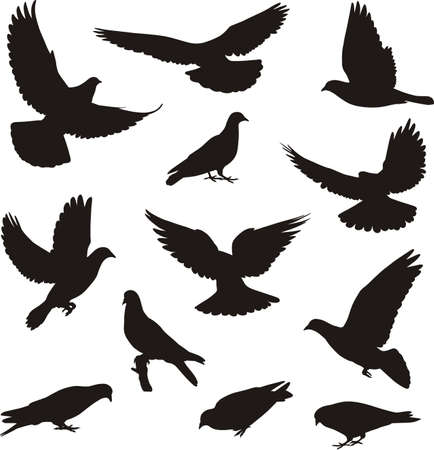 Silhouettes of  pigeons Vector