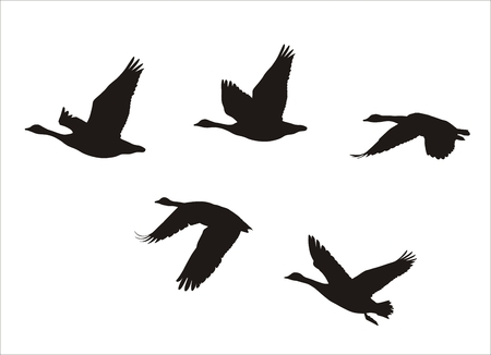 zwerm vogels: silhouetten van het koppel van vliegende Canadese ganzen