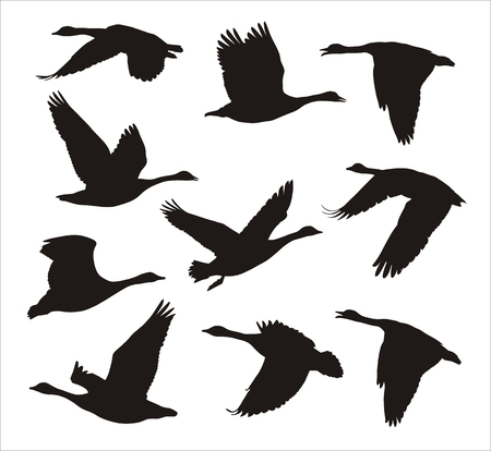 gęsi: sylwetki stado gęsi kanadyjskich latania Ilustracja