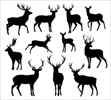 Graphic black silhouettes of wild deers – male, female and  roe deer Illustration