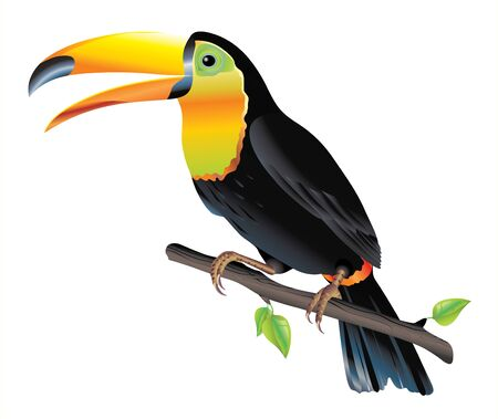 Colorful toucan bird perched on a branch isolated on white