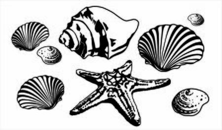 Sea shells and starfish silhouettes marine composition