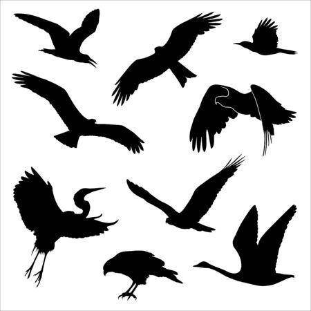 Sylwetki wektorowe różnych ptaków na białym tle