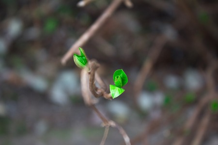 truncated: Start of the life on a small truncated tree branch. Stock Photo
