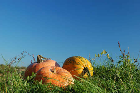 Pumpkins in grass against blue sky Stock Photo