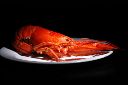 invertebrate: lobster on plate isolated on black background