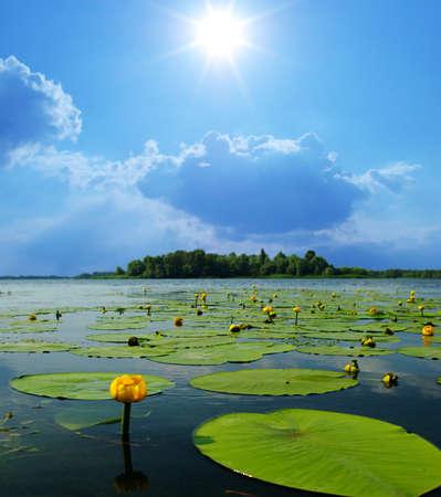 flor de loto: Lilly flores de agua en d�a de verano Foto de archivo
