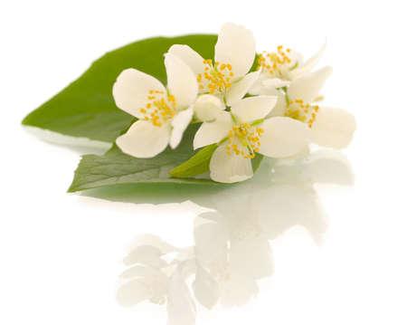 Jasmine flowers. Shallow DOF Stock Photo