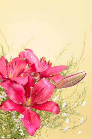 lily buds: Bouquet of Lily Flowers