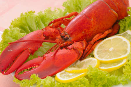 lobster dinner: Lobster Dinner served on plate with lemon