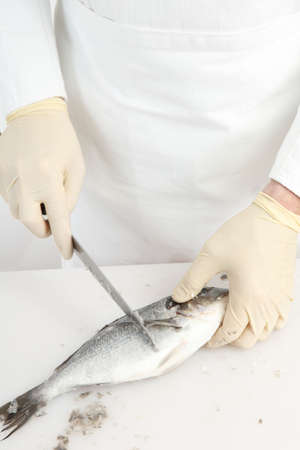 gilthead bream: Cook cleaning gilt-head bream