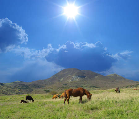 Horses on green meadow against sunny sky Stock Photo - 4729086