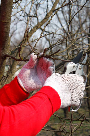 pruning scissors: Hands with garden scissors while out pruning Stock Photo